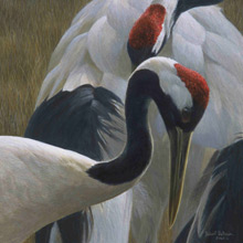 RED CROWNED CRANE PICTURE
