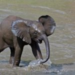 Pictures of Elephant baby