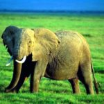 Cute Elephant Pictures