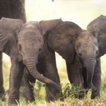 Pictures of Baby Elephant