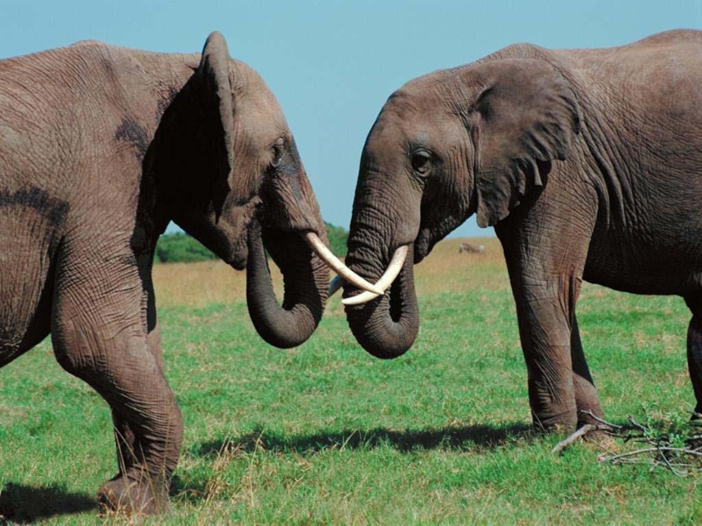 Amazing wildlife pictures images animal photography asian elephants - Image elephant ...