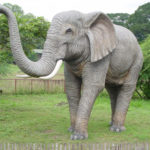 Photos of Elephants