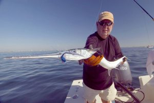 Images of Houndfish
