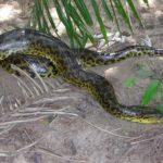 Anaconda Images