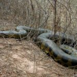 Anaconda Pictures