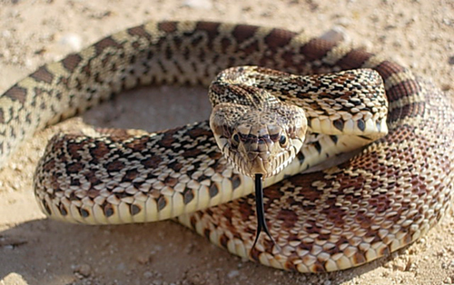 Watch What Viper Venom Does to Human Blood