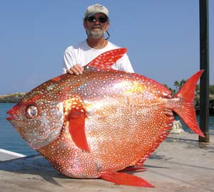 Images of Opah