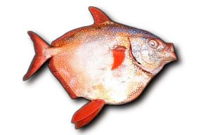 Pictures of Opah