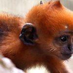Baby Monkey Images