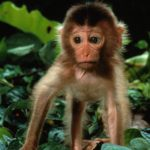 Wallpapers of Baby Monkey