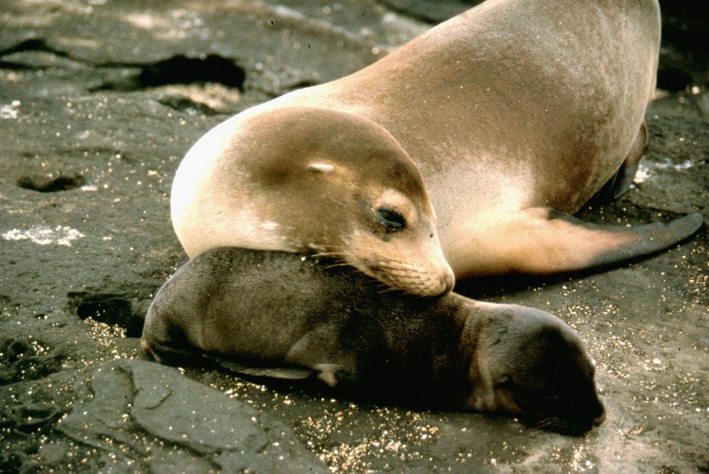 Sea Lion Facts