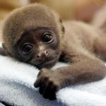 Cute Baby Monkey Pictures