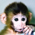 Cute Monkey Pictures