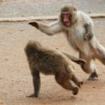 Monkey Fighting Pictures