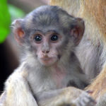 Pictures of Monkey