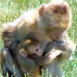 Monkeys Picture