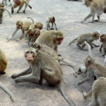 Images of Monkeys