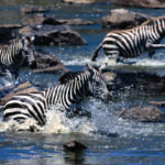 The Image of Zebra