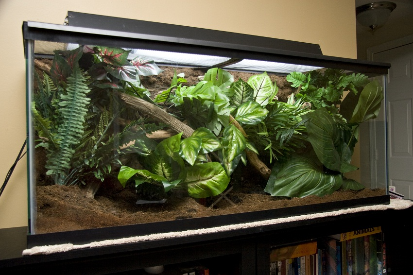 Crested Gecko Enclosure