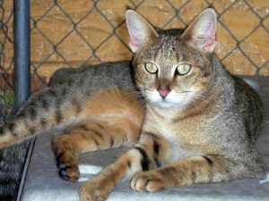 Photos of Jungle Cat