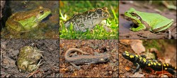 Amphibian Conservation Photo