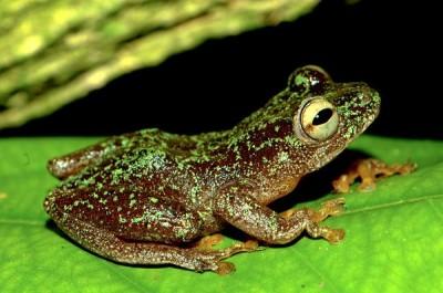 Description of Amphibians