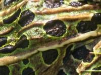 Amphibians Skin Picture