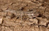 Camouflage Reptile Photo