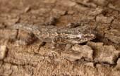 Camouflage Reptile Photo