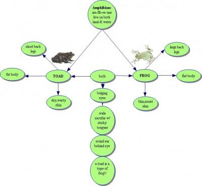 Characteristics of Amphibians Photo
