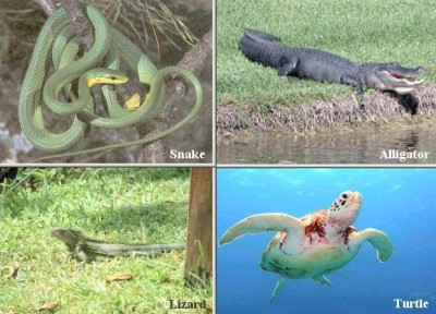 Characteristics of Reptiles Picture