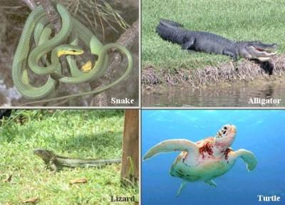 Characteristics of Reptiles Picture