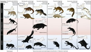 Evolution of Mammals Image