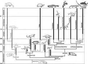 Evolution of Reptiles Image