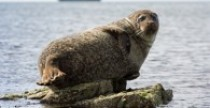 Mammal Aquatic Adaptations Image