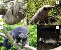 Mammal Arboreal Adaptations Picture
