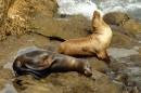Mammal Marine Habitat Picture