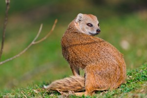 Picture of Mammal