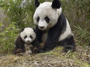 Mammal Reproduction Image