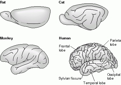 Mammals Facts Characteristics Anatomy And Pictures