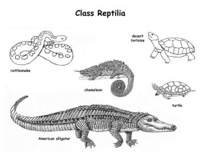 Reptile Classification Image
