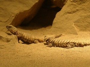 Reptile Reproduction Picture