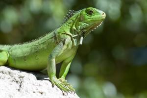 Reptile Picture