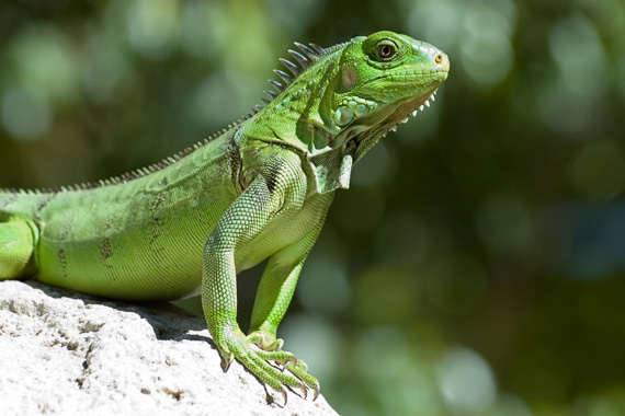 Reptiles - Facts, Char...