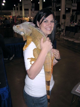 Reptiles as Pets Picture