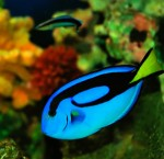 Coral Reef Fish Picture