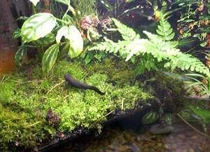 Newt Habitat Picture