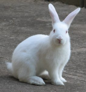 Rabbit Picture