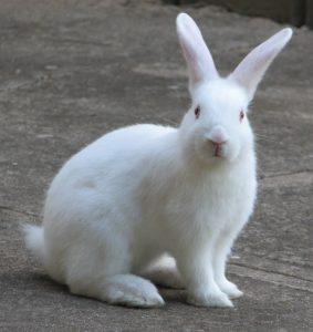 Rabbit Picture