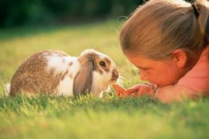 Rabbit As Pets Photo